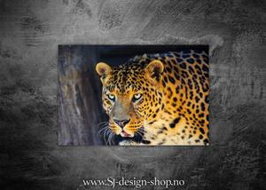 Bilde av Afrikas 5 store - Leoparden