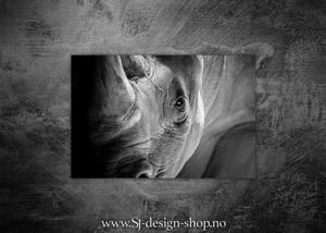 Bilde av Afrikas 5 store - Nesehornet