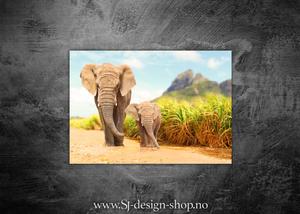 Bilde av Elefanter på tur