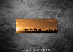 Bilde av Bøffel i solnedgang