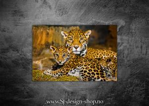 Bilde av Leoparder