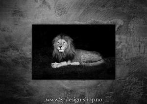 Bilde av Løve i gresset