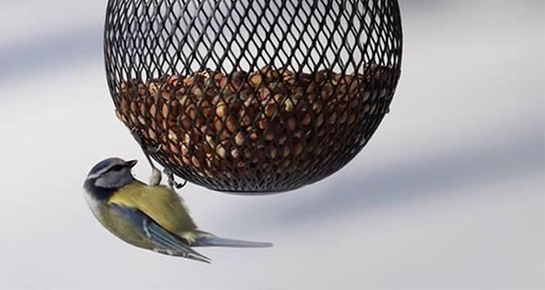 Bilde av Fuglemater nøtt Globe