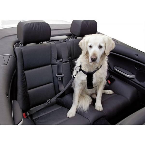 Bilde av Safety belt, black adjustable