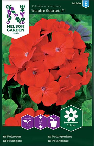 Bilde av Pelargonium 'Inspire Scarlet' F1