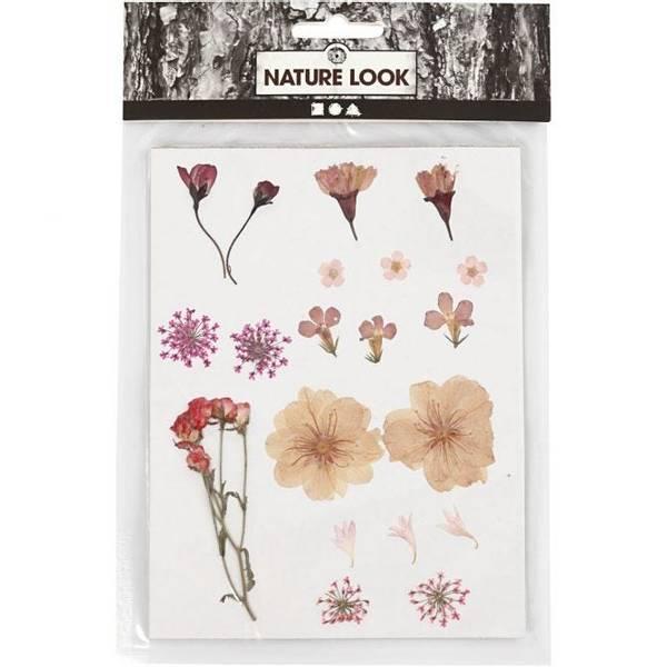 Bilde av Pressede blomster, lys rosa.