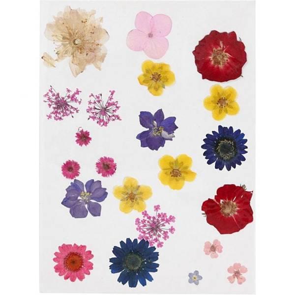 Bilde av Pressede blomster, i