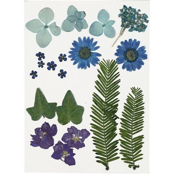 Bilde av Pressede blomster og blader,