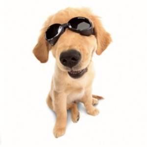 Bilde av Doggels Solbriller Til Hund