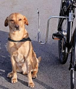 Bilde av Stabilt sykkelfeste til hund