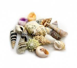 Bilde av Sea shells 5 pk