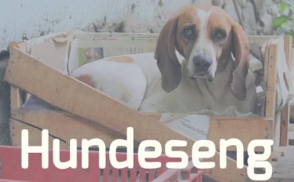 Ser du etter hundeseng? Vi har stort utvalg av hundesenger