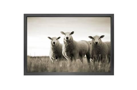 Bilde av CANVAS SHEEP PICTURE - 90 x 150