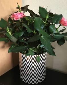 Bilde av Blomsterpotte med sikk sakk