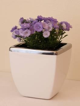 Bilde av Blomsterpotter/Vaser