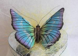 Bilde av Sommerfugl for vegg, liten,