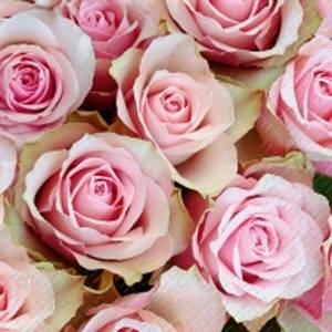 Bilde av Kaffe serviett, Rosa roser.