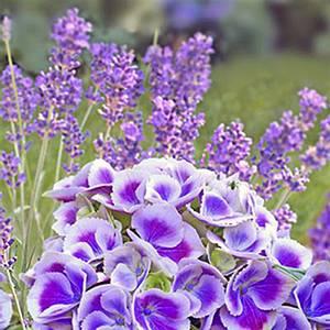 Bilde av Lunsj serviett. Blue summer.