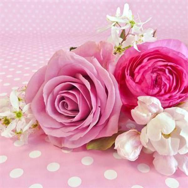 Lunsj serviett. Rosa Romance med to roser.