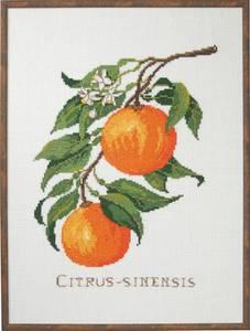 Bilde av Bilde appelsiner broderipakke lin 29x39 cm Eva