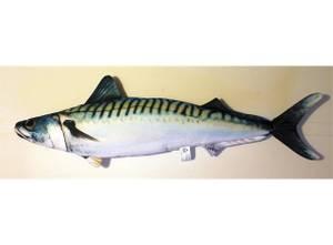 Bilde av Fiskepute Makrell 60cm Scomber Scombrus Pute