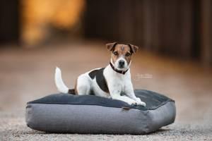 Bilde av Kentucky Dog Bed Soft Pillow
