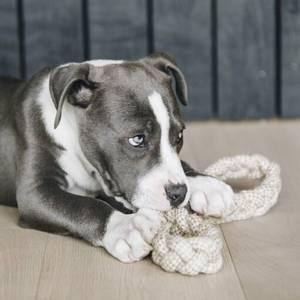 Bilde av Kentucky Dog Toy Cotton Rope