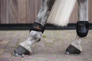 Bilde av Kentucky Young Horses Fetlock