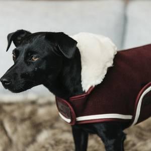 Bilde av Kentucky Dog Coat Heavy