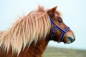 Bilde av Horseware Amigo føll grime