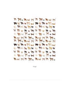 Bilde av Monteverde Design kort, Dogs