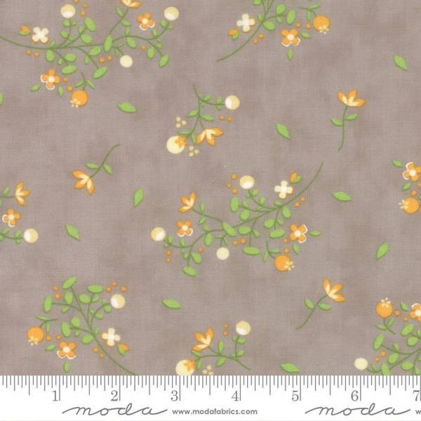 Bilde av Sundrops - 3-8 cm store blomster ranker gul-grønn på varmgrå