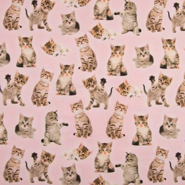 Bilde av Bomullsjersey - 7 cm katter på rosa