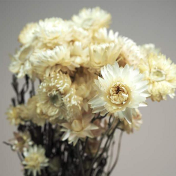 Bilde av Helichrysum - Hvit Naturlig