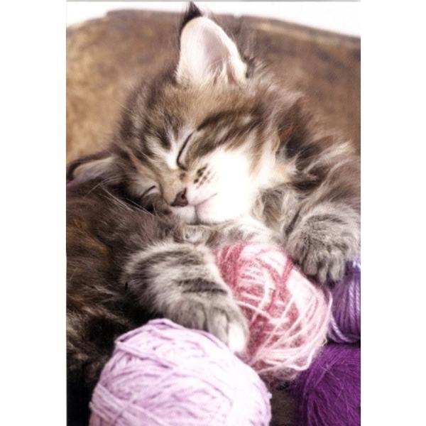Bilde av Mini Kort, Sovende Katt