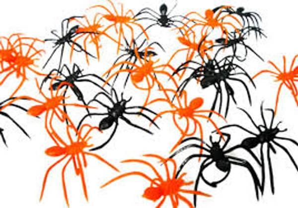 Bilde av Edderkopp Ringer