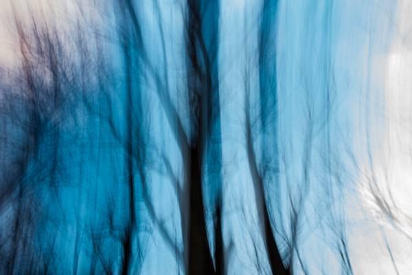 Image of Veins