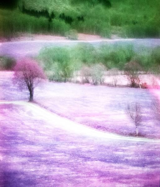 Image of Violet Road