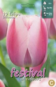 Bilde av Tulipan Ollioules 10 stk