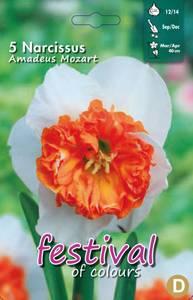 Bilde av Narcissus Amadeus Mozart 5stk