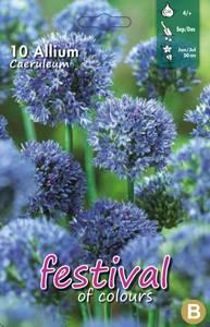 Bilde av Allium Caeruleum 10pakk Azureløk