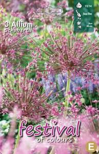 Bilde av Allium Schubertii 3 pakk