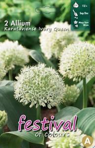 Bilde av Allium Kar. Ivory Queen