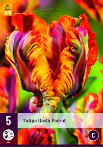 Bilde av Tulipan Rasta Parrot