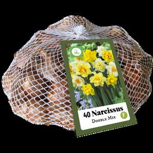 Bilde av Narcissus double mix  40 løk big pack
