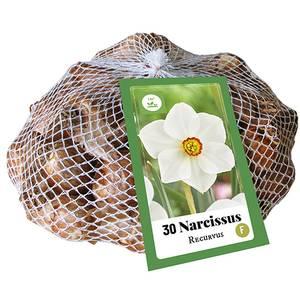 Bilde av Narcissus poëticus Actaea Recurvus 30 big pack