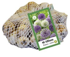 Bilde av Allium Purple and white 40 stykk big pack