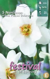 Bilde av Narcisses Albus Plenus Odoratus