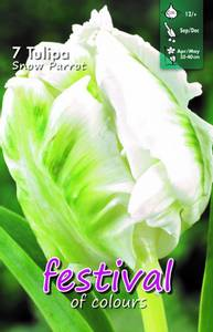 Bilde av Tulipan Snow Parrot