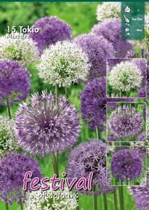 Bilde av Allium big pack mix Tokio 15 stykk